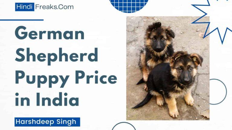 german-shepherd-puppy-price-in-india