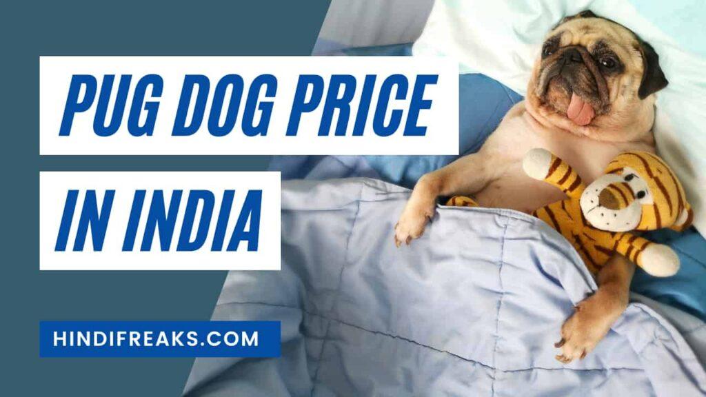 pug-dog-price-in-india